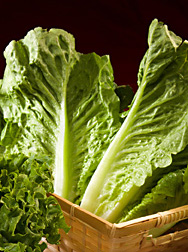 Photo: Romaine lettuce. Link to photo information