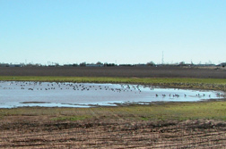 Photo: Pond water above the Ogallala aquifer.