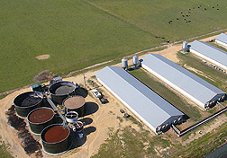 Photo: A system of large circular containers for holding swine manure.