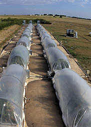 Photo: Long plastic tunnels in which the CO2 levels are controlled.