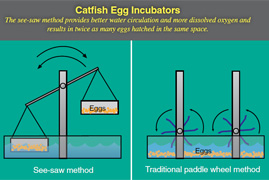 Photo: Diagram showing the differences between a see-saw catfish egg incubator and a conventional style incubator. Link to photo information