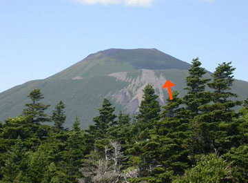 Photo: Red arrow showing where a wild strawberry was collected from the flank of Russian volcano.