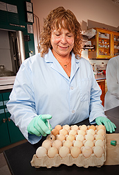 Photo: ARS microbiologist Gerry Huff inoculates chicken embryos through the eggshell. Link to photo information