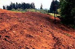 Photo: The edge of an old municipal landfill with a clay cap (top) and a vegetative cap of trees and shrubs (bottom).