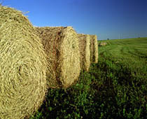 Photo: Wheat straw bales. Link to photo information