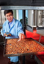 Photo: ARS engineer Zhongli Pan examines a pan of almonds.
