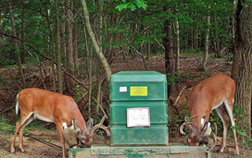 Two deer feeding at a 4-poster device. Link to photo information