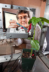 ARS Entomologist Elaine Backus adjusts the position of an insect connected to an electrical probe to study how it feeds and transmits diseases to plants