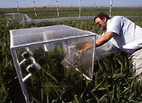 photo of photosynthesis experiments