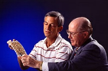 photo of scientists looking at termite traps