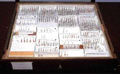photo of specimen drawer