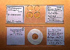 photo of slide-mounted specimens