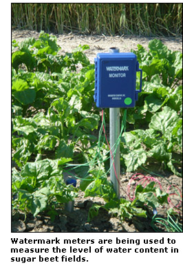 Photograph of a watermark meter that is being used to measure the level of water contenet in sugar beet fields.