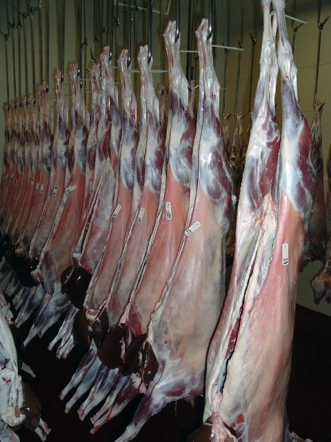 Goat carcasses hanging
