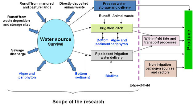 Flowchart - pathogen fate and transport in irrigation water for production of fresh produce