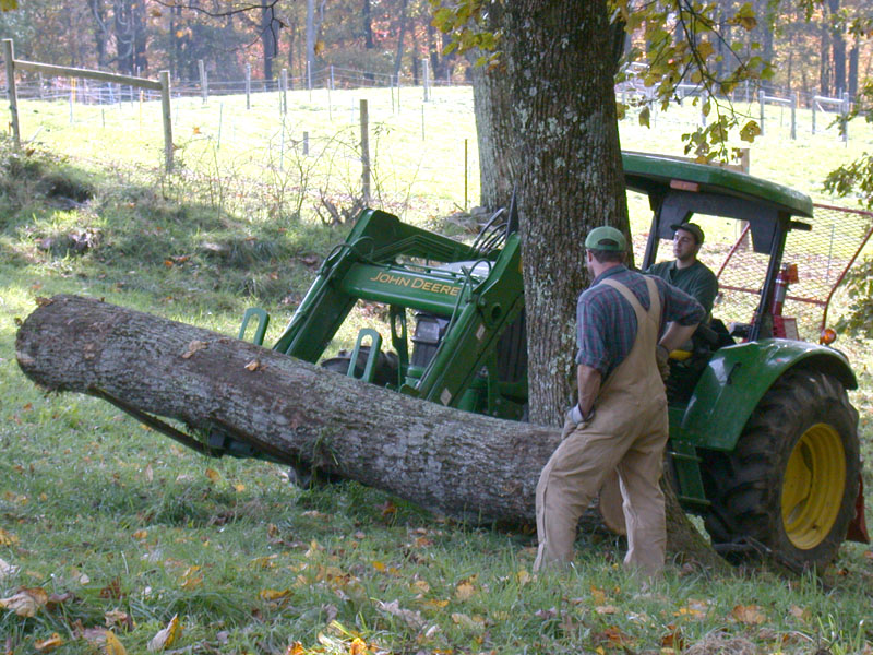 Employees moving poplar log using tractor