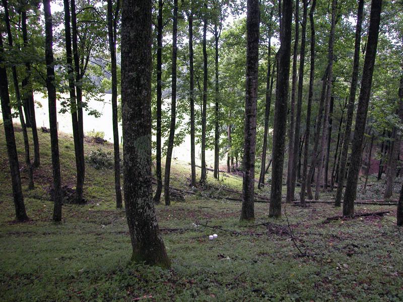 Steep wooded hillside