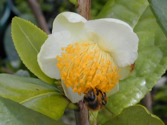 Close-up of blossom with visitor