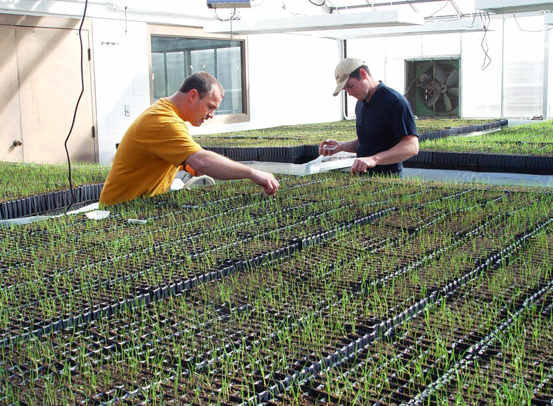 NRCS staff working in greenhouse