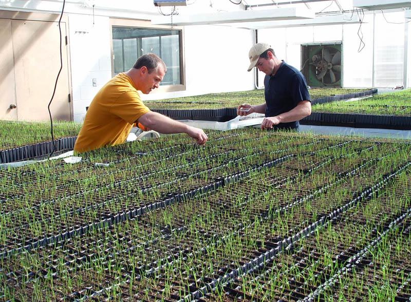 NRCS staff working in greenhouse