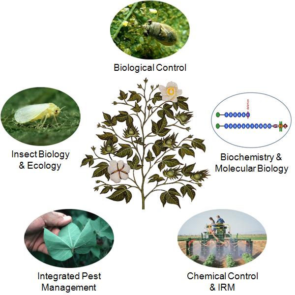 Biological Control of Pests Biological Control