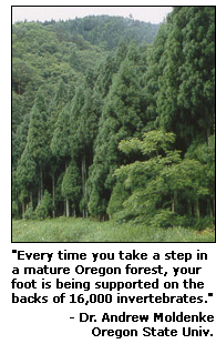 Photograph of a forest with the caption stating that every time you take step in a mature Oregon forest, your foot is being supported on the backs of 16,000 invertebrates.