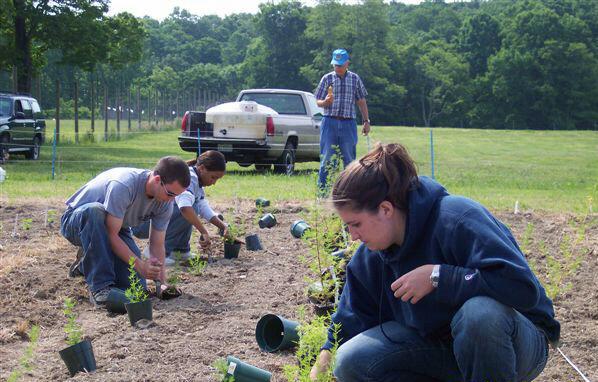Crew planting Artemisia