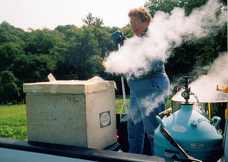 Dr. Foster freezes plant samples in liquid nitrogen
