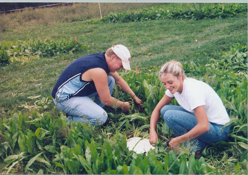 Employees harvest alternative forage