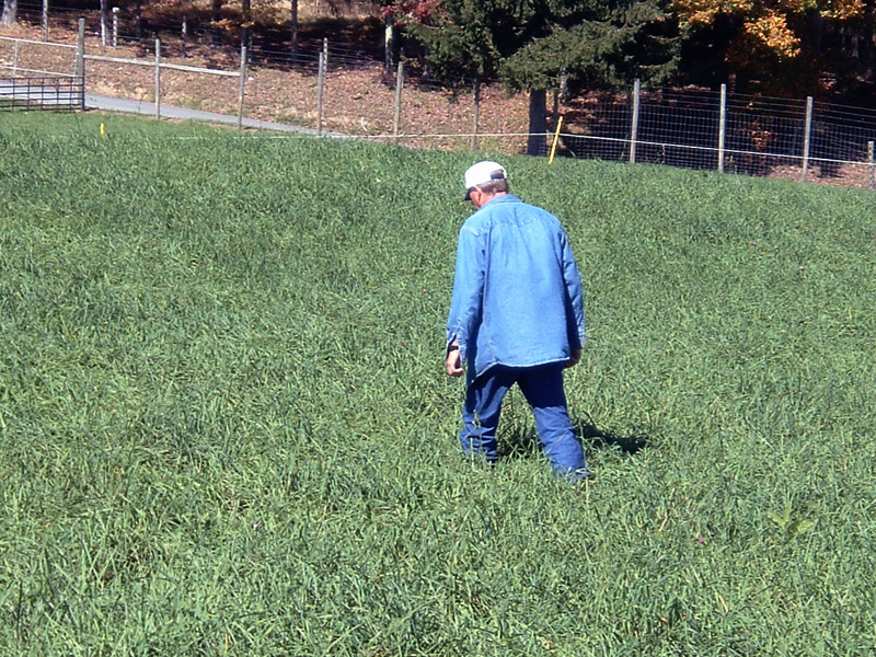 Employee walking in pasture scouting crop