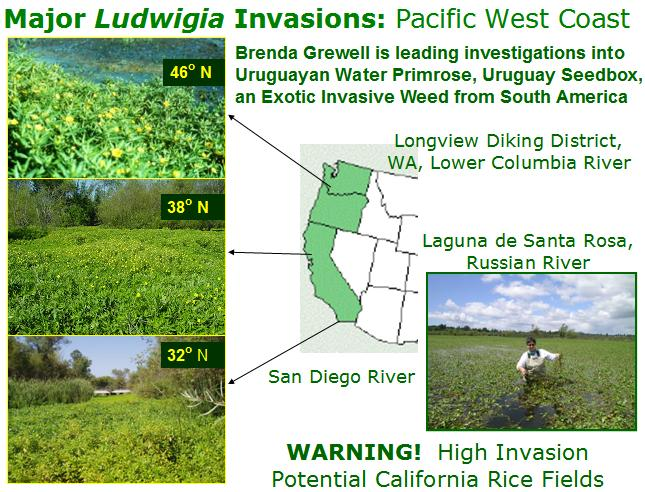 Major Ludwigia invasions on the Pacific West Coast
