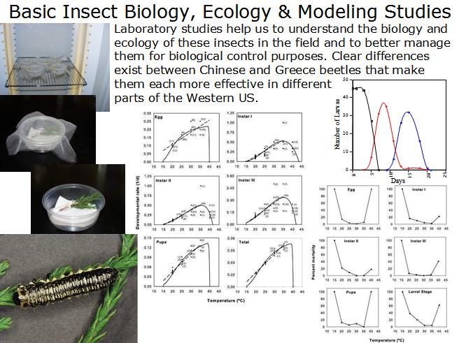 Beetle laboratory and modeling studies