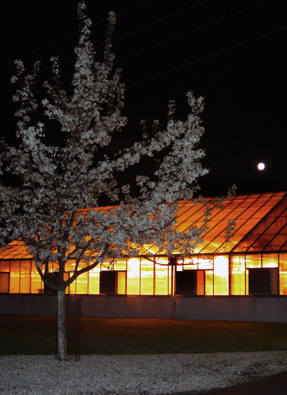 Pear Tree, greenhouse and full moon