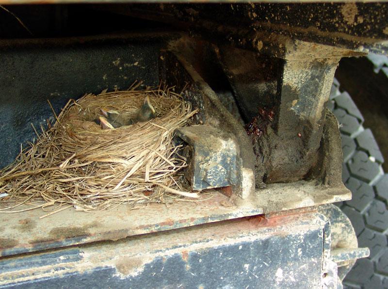 Robin nest on truck frame