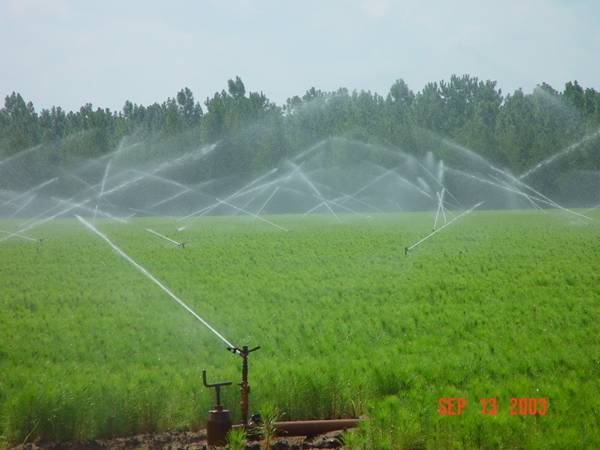 Irrigation management.