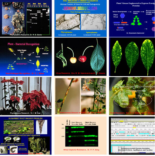 molecular plant pathology images