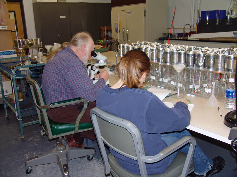 Employees counting microfauna in soil samples