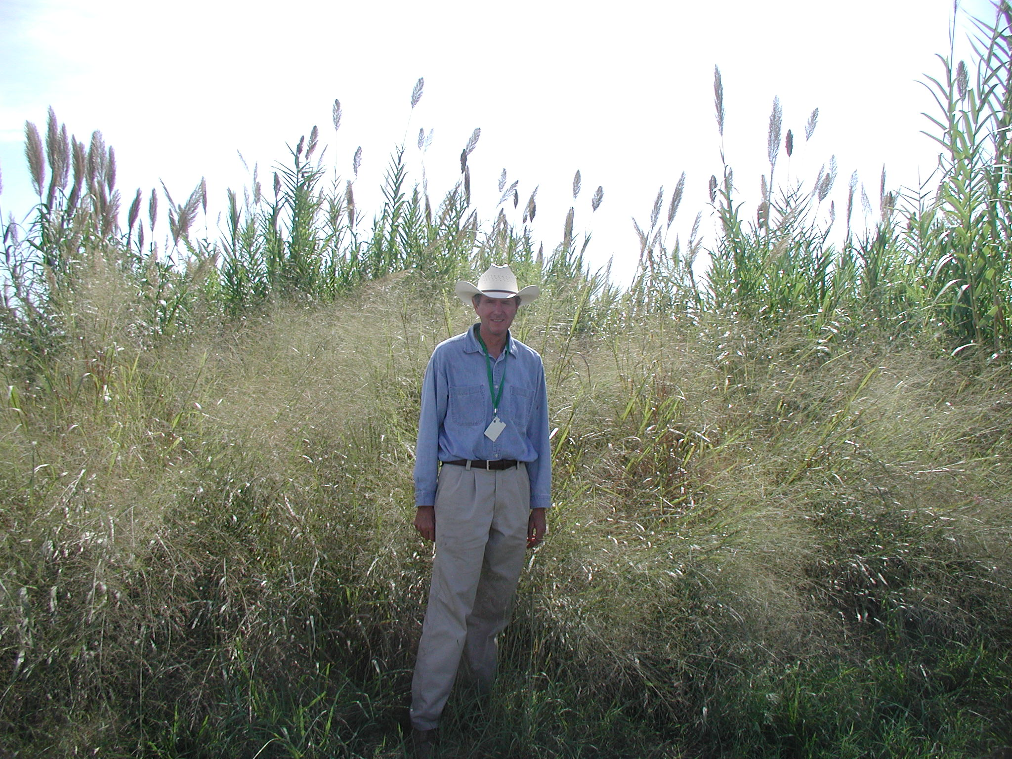 Jim Kiniry in switchgrass