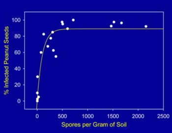 Chart showing the effect of soil population density on peanut infection