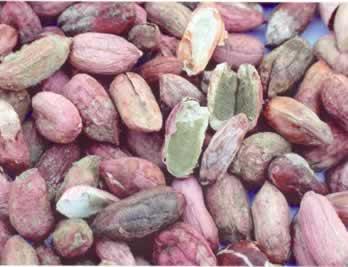 Moldy peanuts