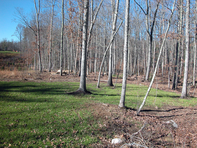 A woodlot
