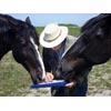 Thumbnail of two horses interested in data collection activity