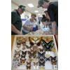 Thumbnail of employee showing his butterfly collection at WV State Fair