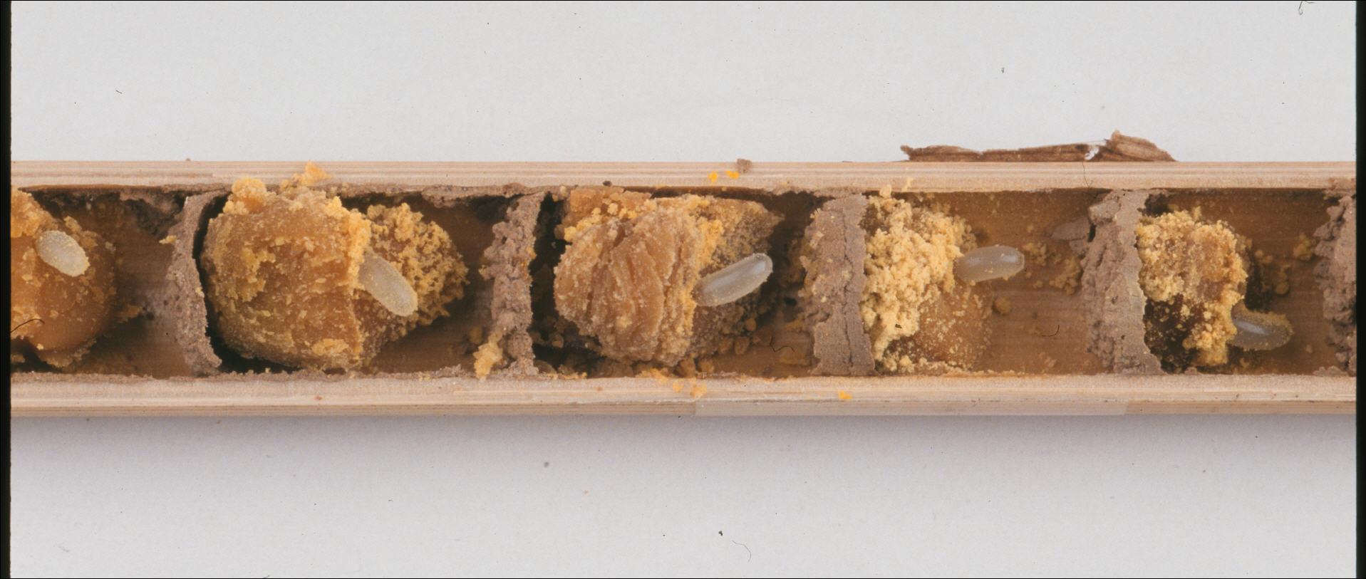 La vida secreta de las abejas | All you need is Biology