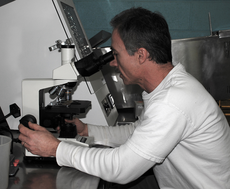 Employee using microscope