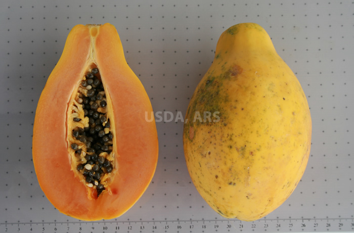 Papaya fruit, half showing seeds and whole