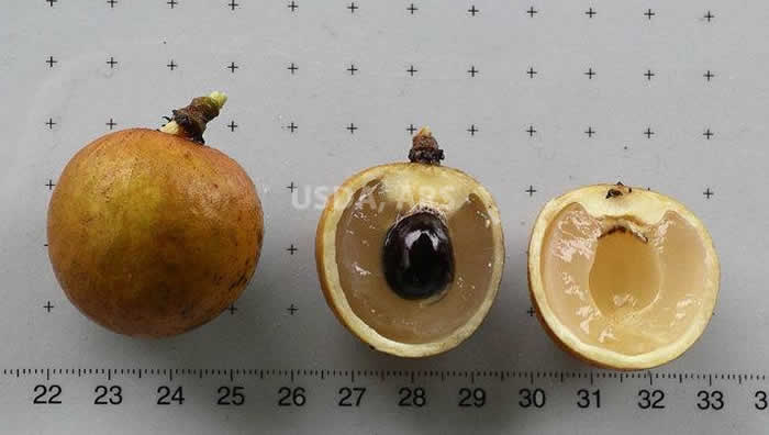 Whole fruit, half fruit showing seed and half fruit without seed