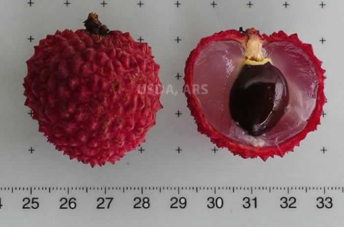 Litchi whole fruit and half fruit showing seed