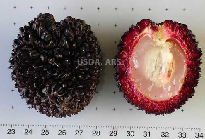 Pulasan whole fruit and half fruit showing seed