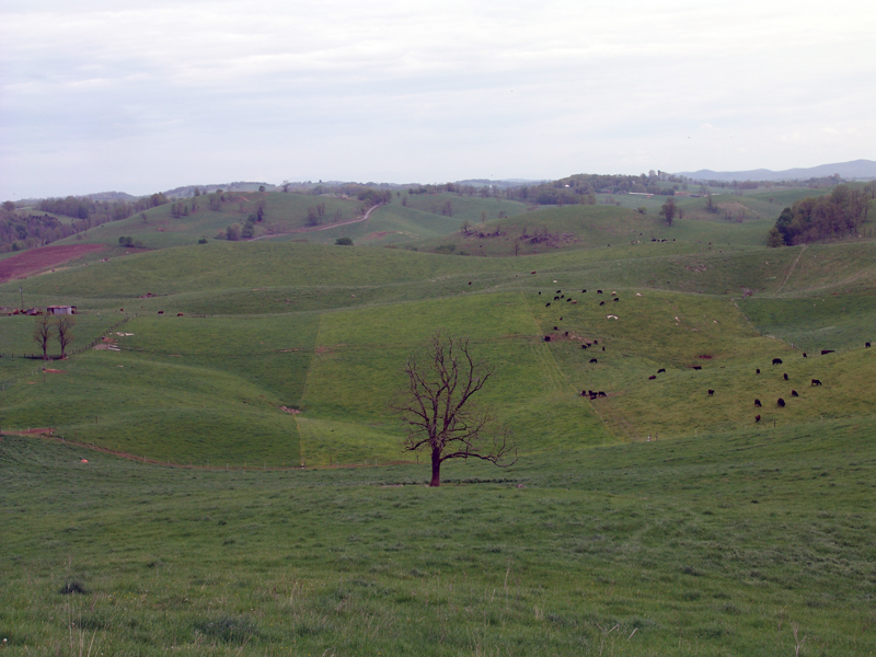 Pastures showing various growth stages